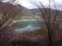 西神山森林公園・桜