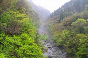 三波石峡 新緑
