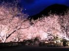 城峯公園・冬桜ライトアップ