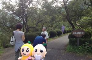 城峯公園冬桜取材