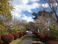 冬桜24.10.29②