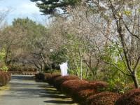 冬桜24.10.25③