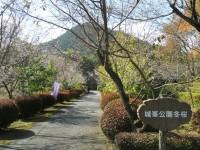 冬桜24.10.25①