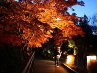 城峯公園 冬桜と紅葉ライトアップ