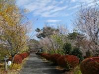 冬桜24.11.5②