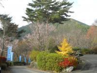 冬桜24.11.13