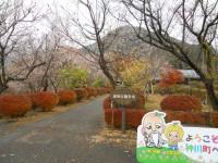 冬桜24.11.26