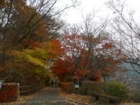 冬桜24.11.26②