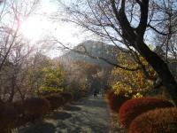 冬桜24.11.28②