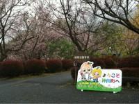 冬桜24.11.6②