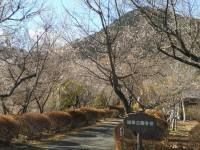 冬桜24.12.10