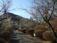 冬桜24.12.12