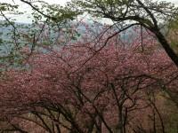 桜25.4.24