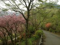 桜25.4.24②