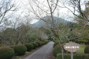 城峯公園冬桜