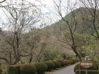 冬桜25.10.18