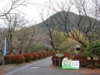 冬桜25.11.15