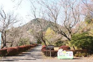 冬桜25.11.11