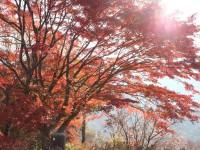 紅葉25.11.18