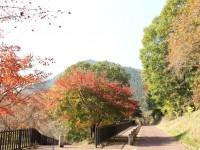 紅葉(桜園付近)