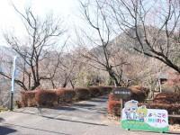 冬桜25.12.6