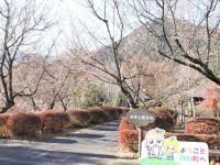 冬桜25.12.2②