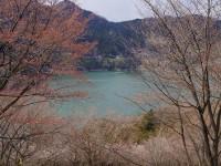 西神山森林公園の桜