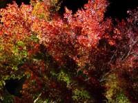 城峯公園紅葉ライトアップ