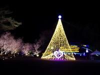 城峯公園冬桜ライトアップ